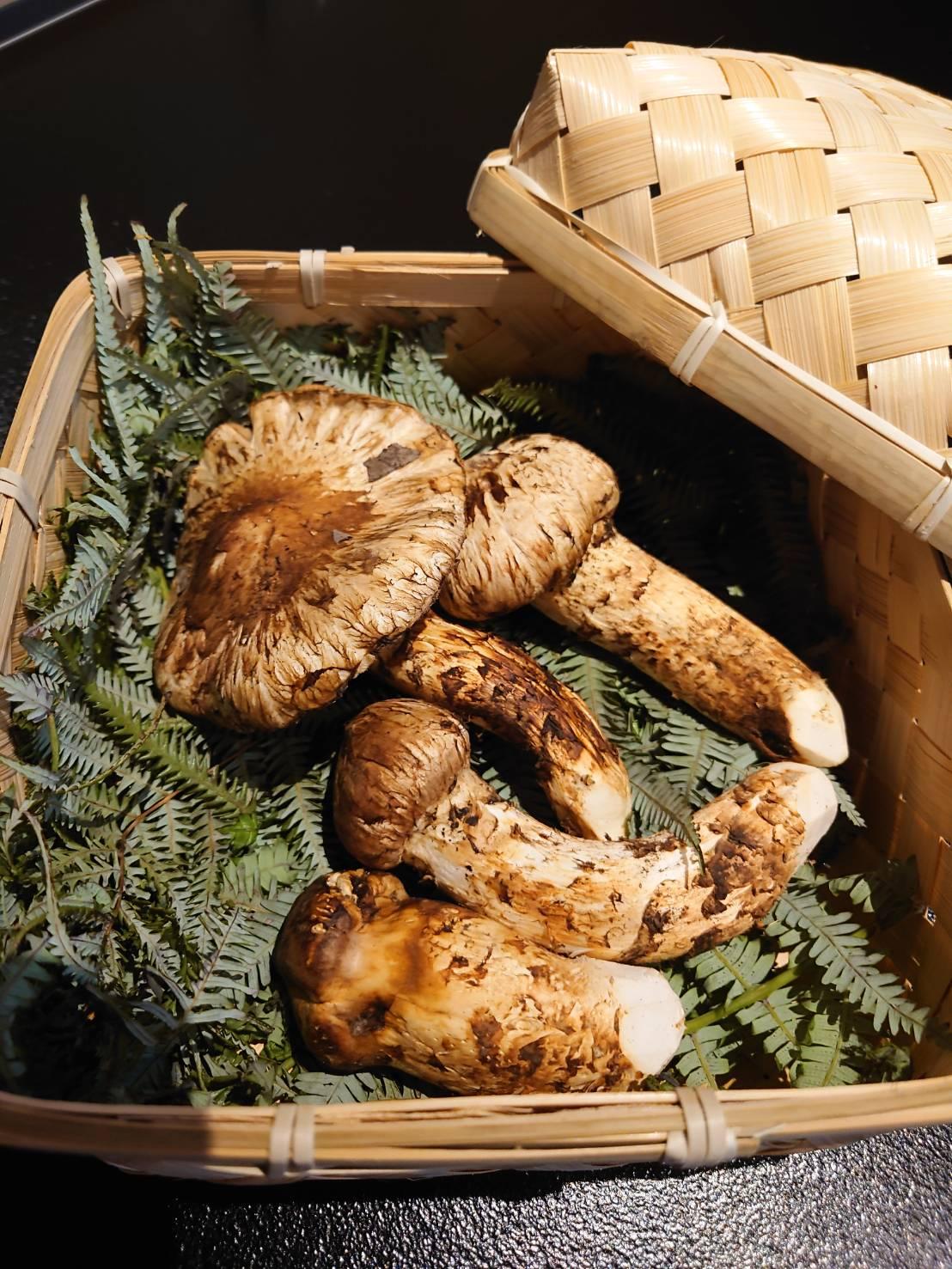 【日本料理みつわ】松茸<p>本日、豊洲市場にて 山口県産 日本一早い松茸を仕入れてまいりました。 上質かつ新鮮な松茸の味と香りは絶品でございます。 素材の持ち味を最大限に生かしてご用意いたします。 数に限りがございますので、お早めにどうぞ。</p>
