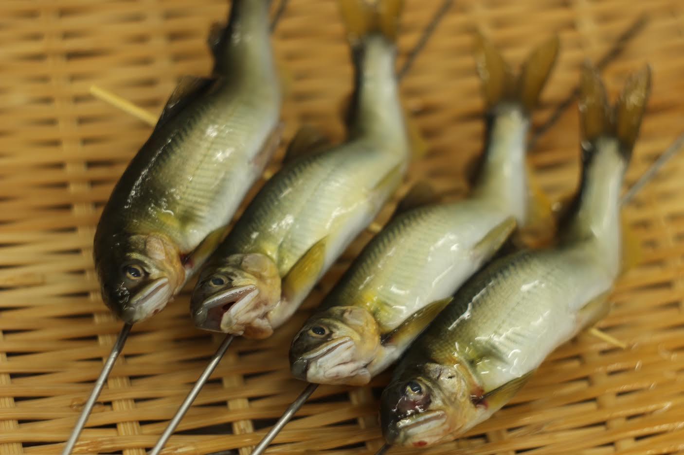 【すし割烹 蘭亭】稚鮎<p>琵琶湖の透き通る水で悠々と泳ぎ育った稚鮎。 7月は鮎がもっとも美味しく味わえる季節です。 苦みも少なく、骨までやわらかな稚鮎は、 小さいながらも繊細で魅力的な味わいです。</p>