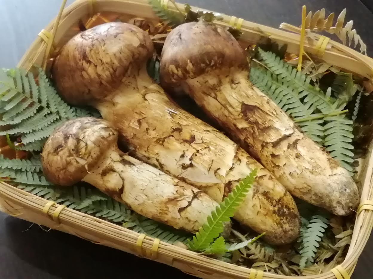 【日本料理みつわ】岩手産 松茸<p>岩手より、採れての香り高い松茸を入荷しております。 清らかな水と土が育んだ上質な松茸は、 味・香り・形すべてが揃っております。 本日はご贈答用にお包みいたしました。(32,400円) 生松茸・焼松茸 1本よりテイクアウト […]</p>